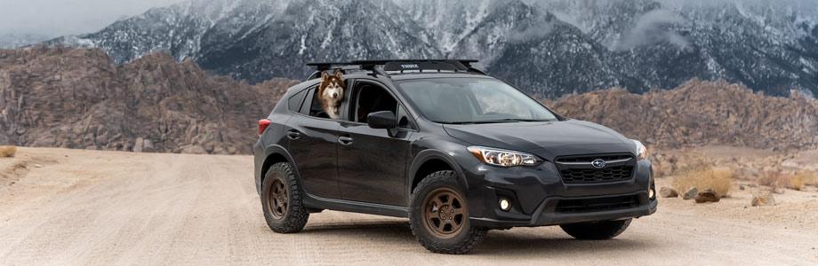 Subaru outback soft-roading with a husky dog
